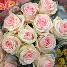 Rose called 'Lovely Dolomiti' sold in bunches of 20 stems from the Flowermonger the wholesale floral home delivery service.