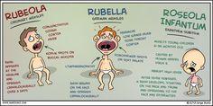 Rubeola vs Rubella vs Roseola   Medical Minded