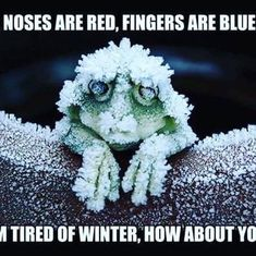 Funny Quotes, Inspirational Quotes, Winter, Red, Coffee, Pictures, Life, Funny Phrases, Life Coach Quotes