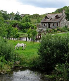 Horse Country and cottage in Ireland!