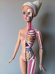 Inside of Barbie... weird & interesting!