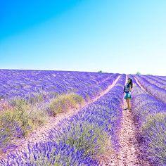 Instagram: @quennandher // Lavender Fields, Aix-en-Provence, France
