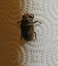 This cicada. | The 26 Scariest GIFs You Will Ever See