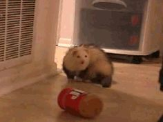 A ferret losing his mind over peanut butter: