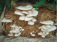 Discover the World of Mushrooms - Mushroom growing for everyone! Online Mushroom shop