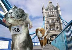 Olympic guinea pigs