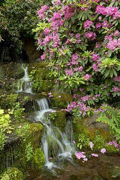 Crystal Springs Rhododendron Garden, Portland, Oregon