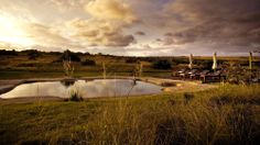 The best boutique hotels in Amakhala Game Reserve. Find a boutique hotel Amakhala Game Reserve and book with Splendia to benefit exclusive offers on a unique selection of hand picked small luxury hotels. Game Lodge, Game Reserve, Beautiful Hotels, African Safari, Lodges, South Africa, Golf Courses, Cape, Travel