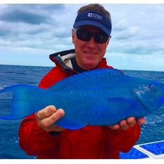 This Blue Parrot fish @munstersfishing posted is amazing!  #offshorelife #offshore #fishingrun #inshore #intercoastal #fishingboat #fishingboats #fishingvessel #fv #lake #bay #ocean #fishingvillage #cork #river #yamaha #warmwaters #coast #longtailboats #mercury #tropical #tropic #florida #keywest #fishingcharter #tuna #tunatower #saltlife #boats #boat by floatingdocks