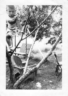 Black and White Vintage Snapshot Photograph Boy Tree Climbing Cute 1950'S | eBay