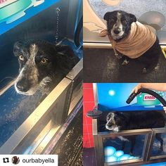 K9000 dog wash demonstration k9000 dog wash pinterest dog the fully self contained k9000 dog wash will shampoo condition blow solutioingenieria Image collections