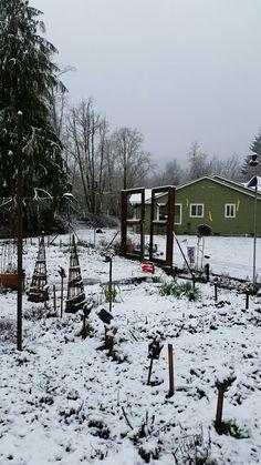My garden in winter...