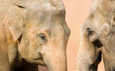 This Is Huge: India Bans Elephants in Circuses