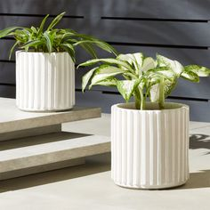 Shop Lineal Cylindrical Planters. Modern lines rise up from this cylindrical planter to create hi/lo earthenware texture. Super clean white paint cracks throughout, bringing rustic edge to this chic form. CB2 exclusive.