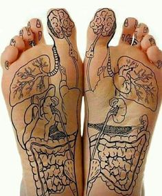Foot reflexology charts show the location of reflex points on your feet. Through acupuncture and massage, applying pressure at these points can help heal ailments of the body. Massage Tips, Massage Techniques, Massage Therapy Certification, Shiatsu, Reflexology Massage, Body Anatomy, Muscle Anatomy, Acupressure Points, Natural Health Remedies