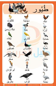 Course: Miscellaneous topics , Section: Birds in Arabic Arabic Alphabet Letters, Arabic Alphabet For Kids, Alphabet Letter Crafts, Arabic Conversation, Arabic Handwriting, Learn Arabic Online, Art Activities For Toddlers, Arabic Phrases, Arabic Lessons