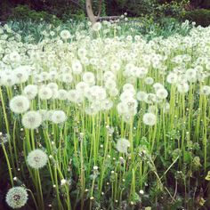 You know what they say...you either see a thousand weeds or a thousand wishes.
