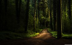 Sintra magical forest