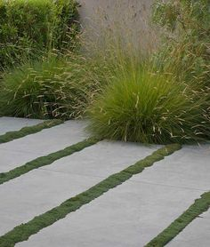 GardeningWalks: paving with groundcover lines