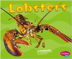 Lobster anatomy of a lobster for older child animal studies lobsters by jody rake readable facts for the emerging reader borrowed from library fandeluxe Choice Image