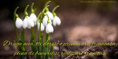 Draga mea, iti doresc o primavara frumoasa 8 Martie, Medicine, Spring, Plants, Nails, Naturaleza, Finger Nails, Ongles, Plant