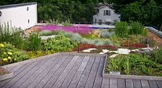 Image result for green roof designs