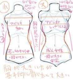 胸の描き方のイラスト講座!肋や腰を意識した胸の描き方とは|お絵かき図鑑