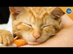 6 Ways to Save a Cat's Life from Jackson Galaxy, My Cat from Hell tv, #teamcatMojo