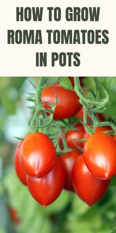 Vegetable Garden Tips, Container Gardening Vegetables, Veg Garden, Garden Pots, Garden Ideas, Garden Projects, Vegetables Garden, Garden Fun, Garden Guide