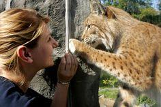 Erlebe Wildtiere aus Alaska, Asien und Afrika in der Zoom Erlebniswelt in Gelsenkirchen - 2 bis 3 Tage ab 45 € | Urlaubsheld