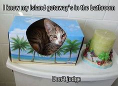 cats,funny   My island getaway is at the tanning bed for 20 minutes,pretending I'm somewhere warm!