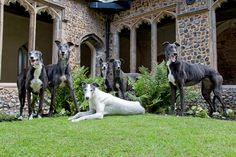 Action for Greyhounds 2013 Calendar http://www.actionforgreyhounds.co.uk/afg-calendar/#