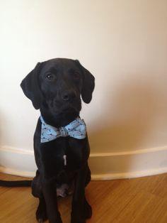 Southern Proper pup.