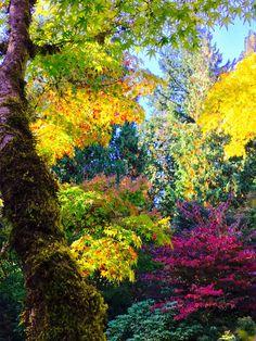 Fall in Seattle - Imgur