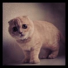 Fuku the kitten ...i have no words for how adorable this is.