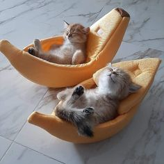 Cute Kittens, Cats And Kittens, Small Kittens, Small Dogs, Cute Funny Animals, Cute Baby Animals, Funny Cats, Funny Sleep, Cute Baby Cats