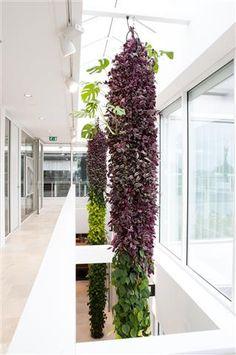 Donkergroen Interieurbeplanting || Groene wanden & Plantwires