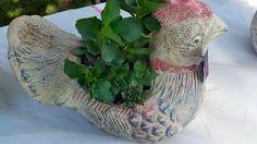Cocksucculent #humor luvsuccs #succulents