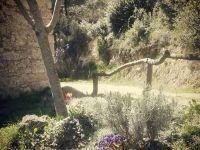 Cuidant el jardí de casa meu... Connect, Country Roads, Nature, Plants, Home, Naturaleza, Planters, Plant, Planting