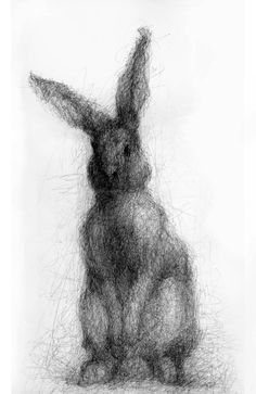rabbit drawings - Google Search