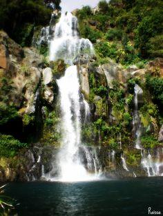 Bassin des aigrettes - Réunion