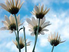 Fotografare fiori: 8 consigli per non sbagliare