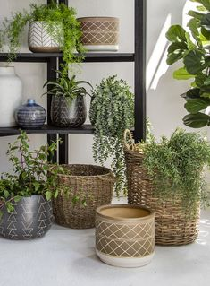 Our Pots & Planters are crafted from high quality materials and will freshen up your space instantly. Artificial plants make beautiful interior decor all year long without the hassle that live plants require. Room Photo, Live Plants, Artificial Plants, Decorative Accessories, Oasis, Planter Pots, Interior Decorating, Basket, Create