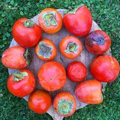 PERSIMMONS are in season! 9 different varieties in this picture! They're one of my favorite fruits during fallHachiya when super ripe is my favorite what's yours? Of you haven't tried them you must do it! Believe me you won't regret it #rawvana --------------------- están de temporada los PERSIMOS! 9 variedades diferentes en esta foto! Una de mis frutas favoritas en el otoñoLos Hachiya súper maduros son mis favoritos cuales son los tuyos?Si no los has probado re recomiendo que lo hagas YA…