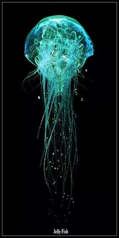Jellyfish / Sea Life ~ Jellyfish I think this is an art piece. Under The Water, Under The Sea, Underwater Creatures, Underwater Life, Underwater Plants, Medusa Animal, Beautiful Creatures, Animals Beautiful, Deep Sea Creatures