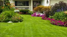 aménagement de jardin moderne avec gazon, parterres de fleurs multicolores et érable du Japon à taille moyenne