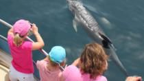 Viator.com is an excursion website linked with TripAdvisor....Dolphin Safari in Gibraltar, Gibraltar, Dolphin & Whale Watching