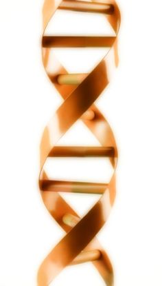 The Application of Clinical Genetics is an international, peer-reviewed, open access, online journal that welcomes laboratory and clinical findings in the field of human genetics. http://www.dovepress.com/the-application-of-clinical-genetics-journal