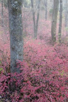 Foggy Morning in the Grove by Rob Travis Dream Photography, Nature Photography, Misty Day, Forest Creatures, Foggy Morning, Peaceful Places, Nature Plants, Tree Forest, Graphic