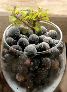 I like making the most of a harvest. Especially when the harvest is as hard won as picking sloes. So I wanted to work out a way of getting multiple products from the same batch of produce. I don't ...